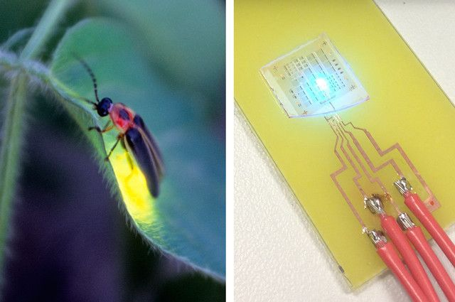 fireflies inspired energy-efficient LED design